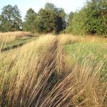 Tygrzyk paskowany (Argiope bruennichi) -środowisko