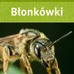blonkowki_heiko_bellmann