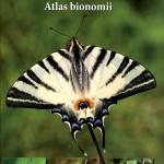 motyle_dzienne_polski-atlas_bionomii_warecki