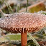 zamrożony grzyb
