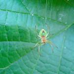 dsc03902-krzyzak-zielony