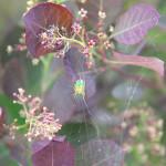 img_1336-sm-krzyzak-zielony