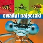 owady_i_pajeczaki